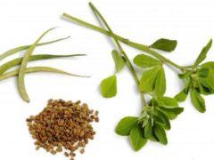 Пажитник – трава и бобы – прекрасное средство для установления лактации